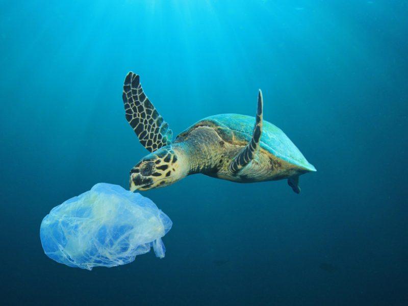 Plastikverbrauch